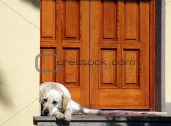 Dog in front of the door