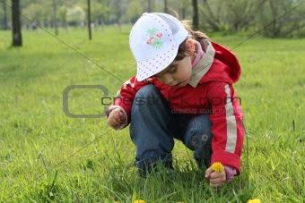 little girl in red coat tear flower dandelion