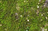 wet green moss background