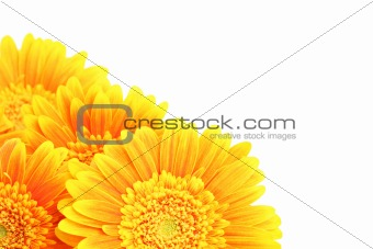 flowers corner isolated