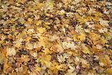 The autumn has come