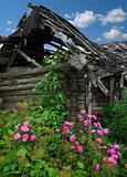 flowerses on background of the old wooden building