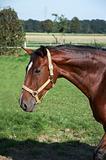 Horses (HK)