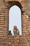 Monkeys in the Window