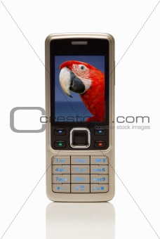 Cellphone with red parrot on screen
