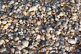 Azov sea beach
