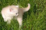 cute kitten outdoor