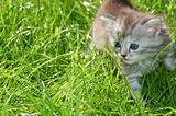 cute kitten outdoor
