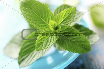 fresh mint