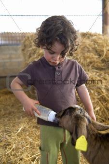 boy feeding baby goat