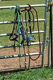Horse bidels and ropes on a fence