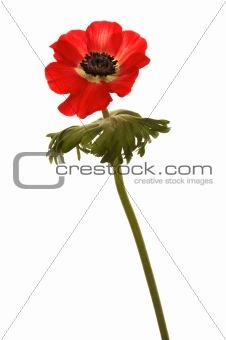 brightly red flower