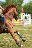 Sport horse-1