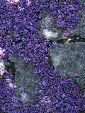 Lilac Petals on Ground