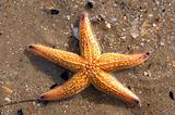 Star fish & shells01