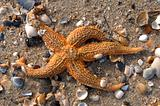 Star fish & shells02