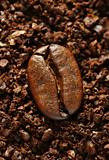 ground coffee bean