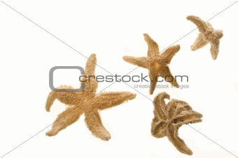 Four Dried Starfish