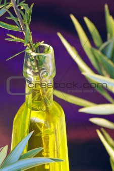 Oil of the Olive tree and rosemary