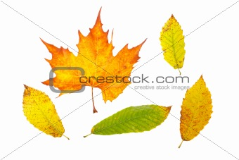 Assortment of leaves