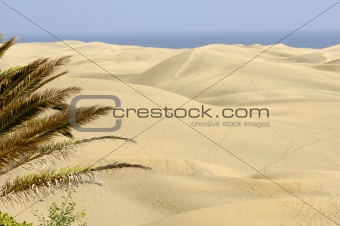 Palm and sand dunes