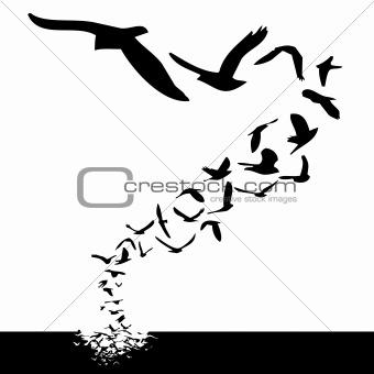 Image Description: lot of birds flying; silhouette style illustration