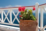 Flowers in vase on summer balcony