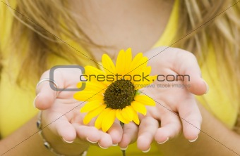 Sunflower Gift