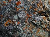 mossy stone background