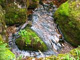 Mountain stream.