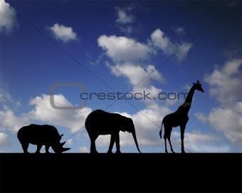 animal's walk