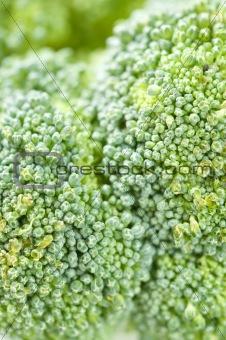 Broccoli closeup