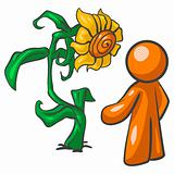 Orange Man Talking to Sunflower