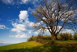 Big oak tree and blue sky