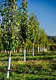 Fresh Orchard