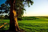 Australian Rural Landscape