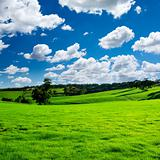 Lush Green Meadow