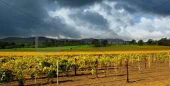 Autumn Vineyard Storm