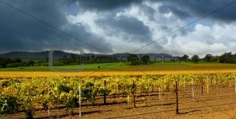 Autumn Vineyard Storm