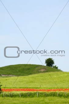 Green hill and tree