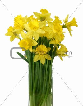 Daffodils in a vase - isolated