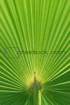 Beautiful Palm Tree Leaf texture
