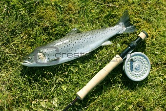 Trout on a the river bank