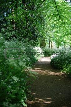 Forrest footpath