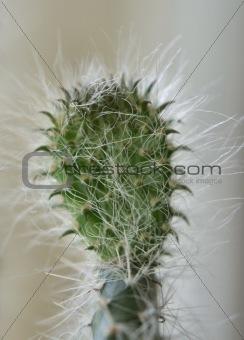 cactus details