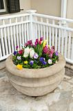 Stone planter with spring flowers