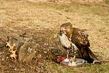 Deadly Hawk Kills Prey
