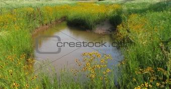 Cat Claw Creek