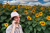 farmer on phone in a sunflower field