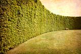Park with geometrical hedges.